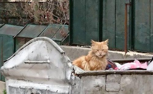 ヨルダンの猫_株式会社シーエスジェイ